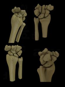 botten